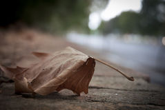 Падение осени выходит сцена предпосылки Стоковые Фотографии RF