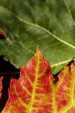 Падение осени красит 10 Стоковое фото RF