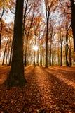 Падение/осень в формате портрета древесин стоковая фотография rf