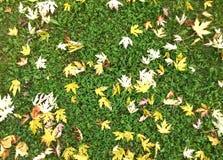 падение предпосылки осени изолировало листья белые Стоковое Изображение