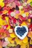 Падение плиты сердца голубик леса красочное выходит деревянная осень предпосылки Стоковое Фото