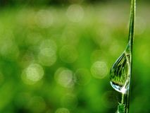 Падение росы воды Стоковые Фотографии RF