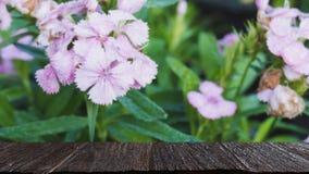 падение росы на розовом цветке в поле & x28; image& x29 нерезкости; с выбранным focu стоковые фото