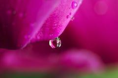 Падение росы на цветке стоковое изображение rf