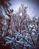 Падение снежка стоковое изображение rf
