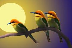Падение лунного света на маленьких птицах Стоковые Изображения