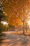 падение цвета 2 деревьев осени Стоковая Фотография