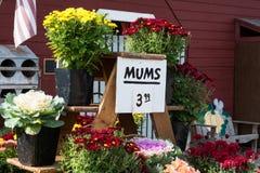 Падение цветет для продажи рынок фермеров Стоковые Фото