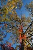 падение цветов Стоковые Фото