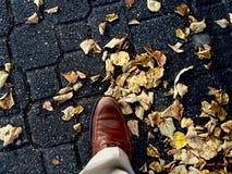падение Стоковые Фотографии RF