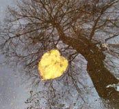 падение Стоковое Фото