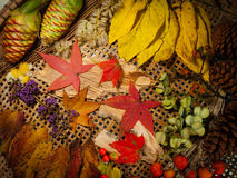 падение 6 цветов Стоковая Фотография RF