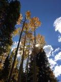 падение colorado Стоковая Фотография RF