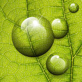 Падения воды вектора на зеленых лист Стоковая Фотография RF