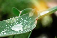 Падения воды в сезоне дождей Стоковое Фото