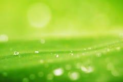 Падения воды и зеленая предпосылка текстуры лист Стоковое Фото