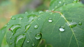Падения воды на зеленом разрешении стоковые фотографии rf