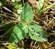 Падения воды на зеленых листьях Стоковые Фото