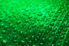 Падения воды на зеленых лист банана Стоковая Фотография