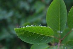 Падения воды на зеленых лист куста Стоковое Фото
