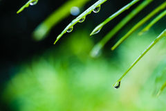 Падения воды на зеленых лист Стоковое Изображение