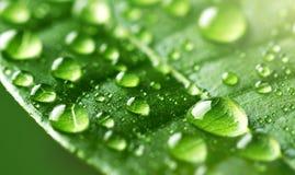 Падения воды на зеленых лист Стоковое фото RF