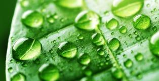Падения воды на зеленых лист Стоковые Фото