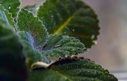 Падения воды на зеленых пушистых листьях Стоковое Изображение
