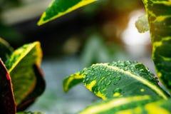Падения воды на листьях с солнечным светом Стоковые Изображения