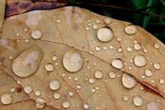 Падения воды на лист осени стоковая фотография rf