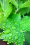 Падения воды на лист Стоковые Фотографии RF