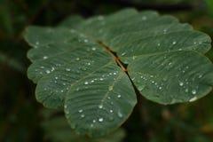 Падения воды на лист Стоковые Изображения RF