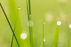 Падения воды на предпосылке травы Стоковые Фото