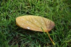 Падения воды на сухих лист Стоковое Изображение