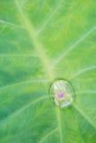 Падения воды на Bon листьев в дневном свете Стоковые Фото