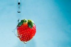 Падения воды падают на красные клубники на голубой предпосылке Стоковая Фотография