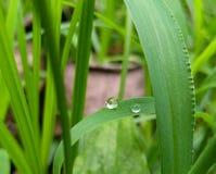 Падения воды Стоковые Фотографии RF