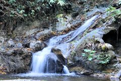 Падения в джунгли Palawan острова Стоковые Изображения RF