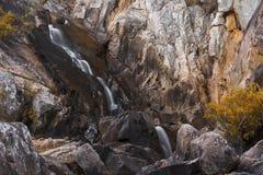 Падения гнезда ворон в течение дня Стоковое фото RF