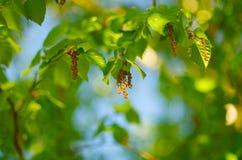 Падения зеленого цвета Стоковое Изображение RF