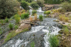 Падения и река Tumwater Стоковая Фотография