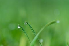 Падения и трава дождя Стоковая Фотография RF
