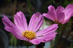 Падения и цветки воды Стоковое Изображение RF