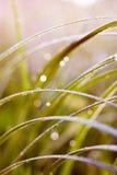 Падения на листьях Стоковая Фотография