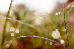 Падения на листьях Стоковые Фото
