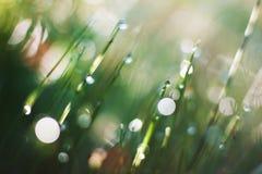Падения на листьях Стоковое Изображение RF