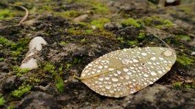 Падения на листьях Стоковое Изображение