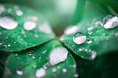 Падения на листьях Стоковые Изображения