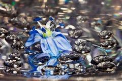 Падения на цветке, макрос стоковые изображения