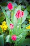 Падения на цветке Стоковая Фотография